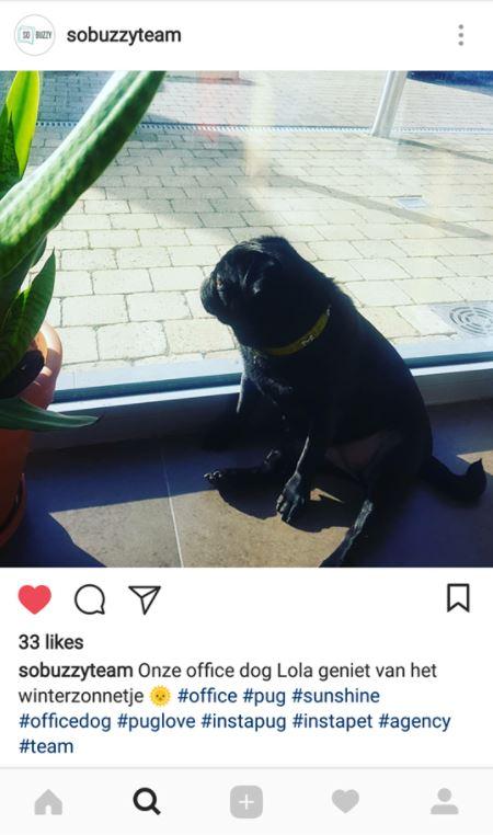Instagram Hashtags goed gebruikt