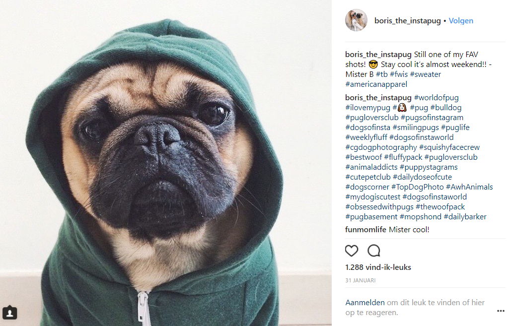social media inspiratie Boris The Instapug dog