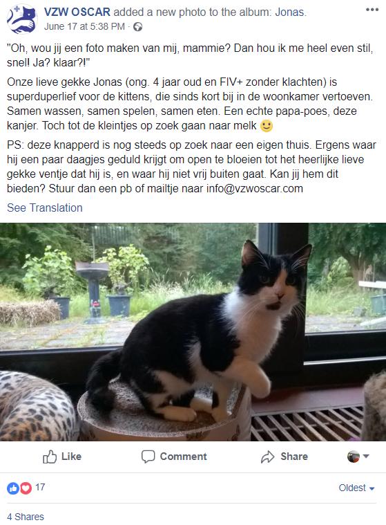 Voorbeeld social media post VZW Oscar katten
