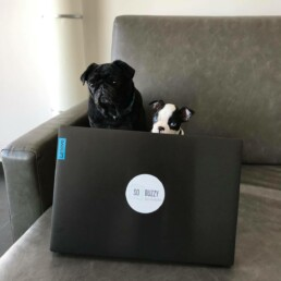 So Buzzy office dogs Lola & Tes